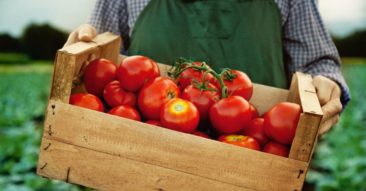 Viete, aké vitamíny obsahujú rajčiny? Prekvapí vás, že sú skvelé na prostatu